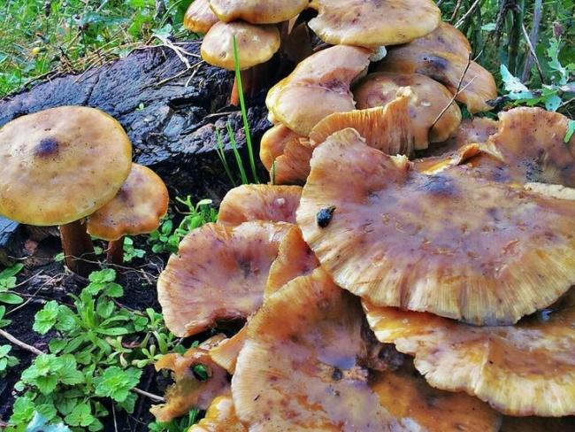 Asturias - Setas y hongos