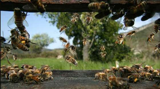 Aula de la miel- Picos de Europa